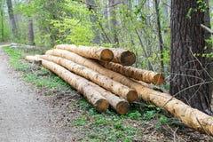 Groupe d'arbres abattus près d'un site de notation attendant pour être conduit loin photographie stock