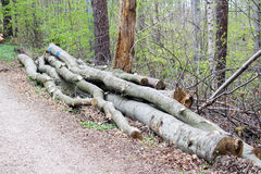 Groupe d'arbres abattus près d'un site de notation attendant pour être conduit loin image stock