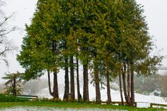 Groupe d'arbres dans la tempête de neige images libres de droits