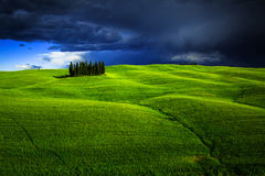 Groupe d'arbres de cyprès en Toscane Photographie stock