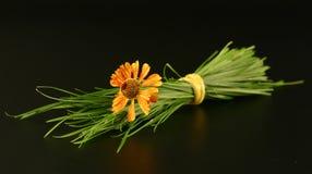 Groupe d'herbe et de fleur Photo stock