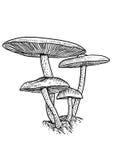 Groupe d'illustration de champignon, dessin, gravure, vecteur, ligne Photos libres de droits