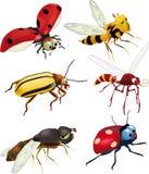 Groupe d'insectes illustration libre de droits