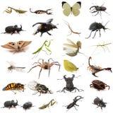Groupe d'insectes européens image libre de droits