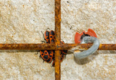 Groupe d'insectes rouges Image stock