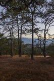 Groupe d'ocotes dans la forêt photographie stock libre de droits