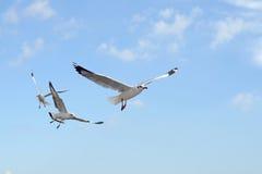 Groupe d'oiseau de mouette de vol photo libre de droits
