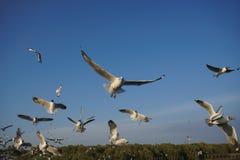 Groupe d'oiseaux glissant au coucher du soleil Photographie stock