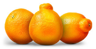 Groupe d'oranges et de mandarines d'isolement sur le blanc Image libre de droits