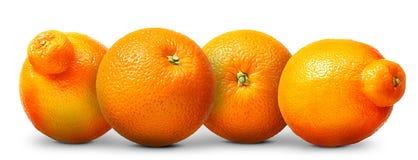 Groupe d'oranges et de mandarines d'isolement sur le fond blanc Images libres de droits