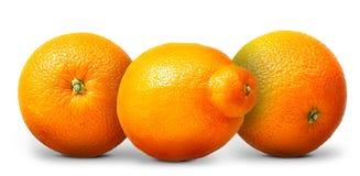 Groupe d'oranges et de mandarines d'isolement sur le fond blanc Images stock