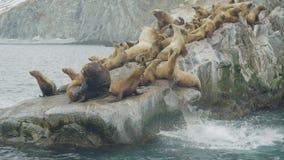 Groupe d'otaries détendant sur la falaise rocheuse dans l'océan Faune et animal de mer clips vidéos