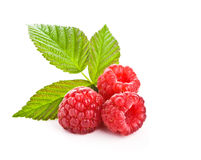 Groupe d'une framboise rouge Image stock