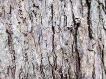 Groupe dans l'arbre photos stock