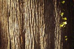 Groupe dans l'arbre Photo stock