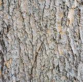 Groupe dans l'arbre Images stock