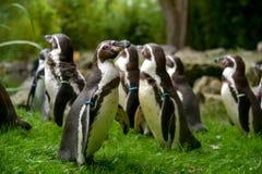 Groupe dans les pinguins Image libre de droits