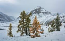 Groupe de Ð d'arbres sur un fond des montagnes Photo stock
