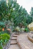 Groupe de beaucoup d'espèces de cactus dans le jardin Photographie stock libre de droits