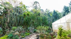Groupe de beaucoup d'espèces de cactus dans le jardin Images stock