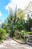 Groupe de beaucoup d'espèces de cactus dans le jardin Image libre de droits