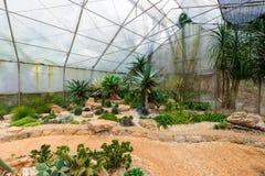 Groupe de beaucoup d'espèces de cactus sur le gravier s'élevant en serre chaude Photos libres de droits