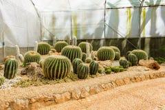 Groupe de beaucoup d'espèces de cactus sur le gravier s'élevant en serre chaude Photo stock