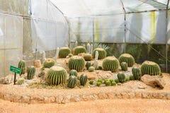 Groupe de beaucoup d'espèces de cactus sur le gravier s'élevant en serre chaude Photographie stock