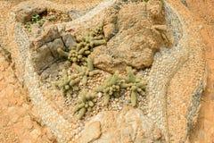Groupe de beaucoup d'espèces de cactus sur le gravier s'élevant en serre chaude Photo libre de droits