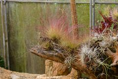 Groupe de beaucoup d'espèces de cactus sur le gravier s'élevant en serre chaude Images stock