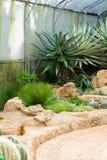 Groupe de beaucoup d'espèces de cactus sur le gravier s'élevant en serre chaude Photos stock