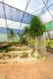 Groupe de beaucoup d'espèces de cactus sur le gravier s'élevant en serre chaude Image libre de droits