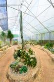 Groupe de beaucoup d'espèces de cactus sur le gravier s'élevant en serre chaude Image stock