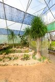 Groupe de beaucoup d'espèces de cactus sur le gravier s'élevant en serre chaude Images libres de droits