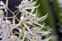 Groupe de belle orchidée blanche sur le fond vert Photos stock
