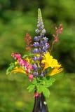 Groupe de belles fleurs d'été Photo libre de droits