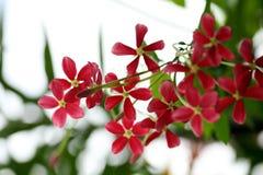 Groupe de belles fleurs roses Photo libre de droits