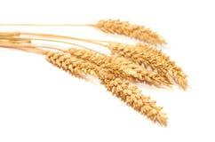 Groupe de blé d'or comme symbole de l'amour et de la chaleur Photo libre de droits