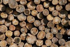 Groupe de bois Image libre de droits