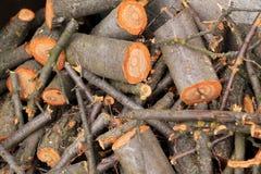 Groupe de bois de chauffage scié frais Photo stock