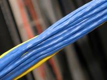 Groupe de câbles de réseau Photographie stock libre de droits