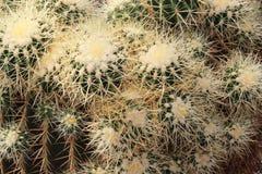 Groupe de cactus dans un zoo photos libres de droits