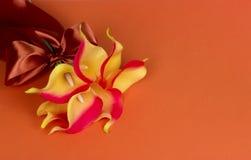 Groupe de callas jaune-orange avec le ruban sur le fond orange Photo libre de droits