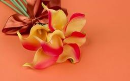 Groupe de callas jaune-orange avec le ruban sur le fond orange Image stock