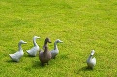 Groupe de canards. Image libre de droits