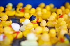 Groupe de canards en caoutchouc jaunes sur le marché juste, pour jouer les jeux W Image libre de droits