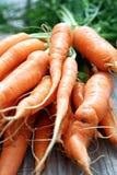 Groupe de carottes Images libres de droits