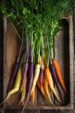 Groupe de carottes fraîches d'arc-en-ciel Photographie stock
