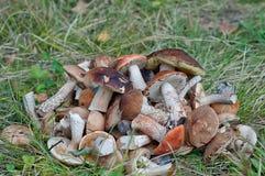 Groupe de champignons Photographie stock