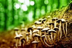 Groupe de champignons de couche Images libres de droits